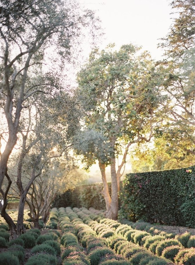 San Ysidro ranch wedding plantation, wedding planner, wedding planner, california wedding, mini-moon